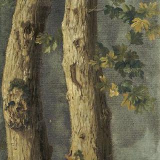 잎이 있는 나무의 두 몸통과 담쟁이 덩굴 가지