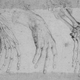 손의 해부학적 습작 세 점