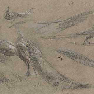다섯 마리의 공작과 날개들