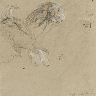 두 마리의 독수리