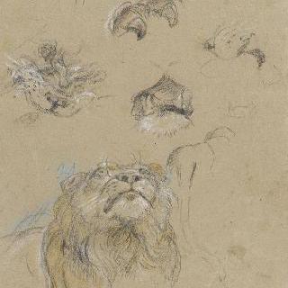 사자 습작 : 머리, 발톱과 뒷모습의 몸
