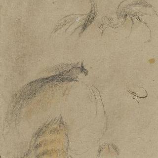 뒷모습의 관을 쓴 두 마리의 두루미와 너구리 한 마리의 습작