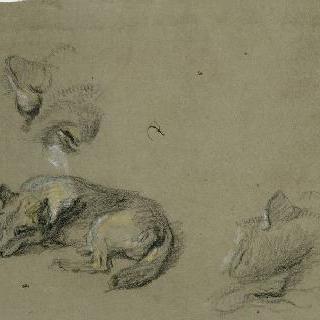 누워있는 한 마리 늑대와 두 머리