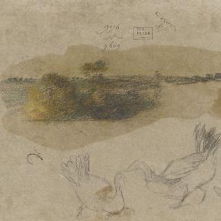 물칼퀴가 있는 새들과 풍경의 습작