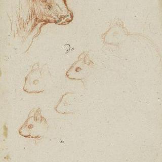 황소 머리와 다람쥐의 다섯 개의 머리