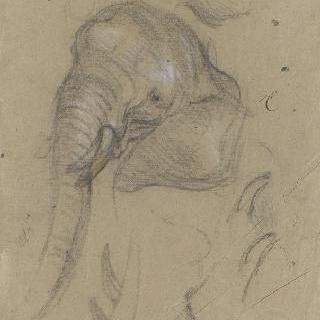 코끼리 얼굴과 상아 습작