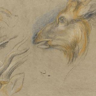 노루 머리와 사슴 뿔
