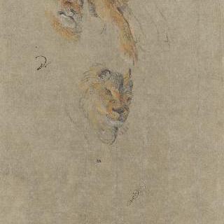 사자의 두 개의 머리와 발