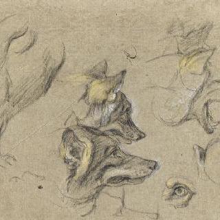 늑대 머리와 신체 세부 묘사 부분 습작