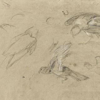 새들 중 날개를 펼친 두 마리의 새 습작