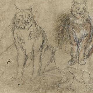 습작 : 정면에 앉아있는 두 마리의 스라소니, 옆 모습의 몸과 발 초벌화