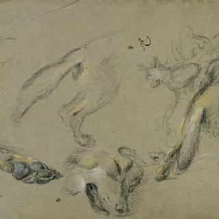 뒷모습의 늑대의 발, 얼굴과 몸통 습작