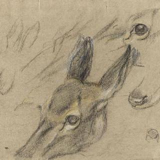 암사슴 습작 : 머리, 눈, 부리, 발과 귀