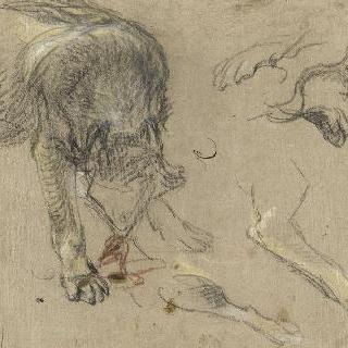 한 마리의 늑대, 머리와 발 습작