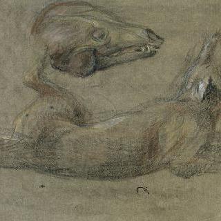 누워있는 늑대와 머리 습작