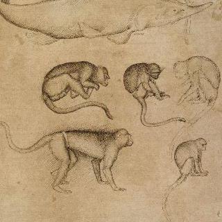 철갑 상어의 우측 방향 옆모습. 각기 다른 포즈의 일곱마리 원숭이
