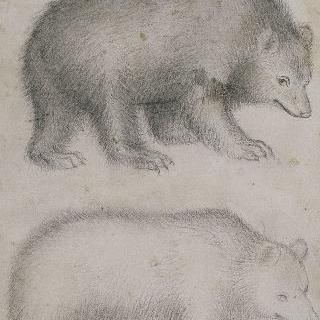 우측 방향의 서 있는 두 마리의 곰의 옆모습