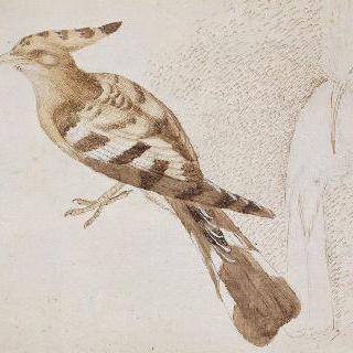 휴식중인 두 마리 띠무늬 오디새, 좌측 방향의 옆모습 한 마리와  정면의 다른 한 마리