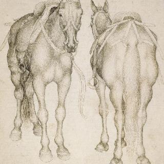 마구를 단 두 마리의 말의 4분의 3상. 앞 모습과 뒷모습