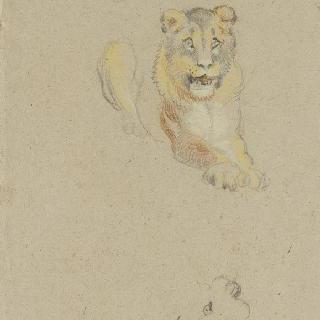 누워있는 사자 한 마리와 암사자의 두 머리