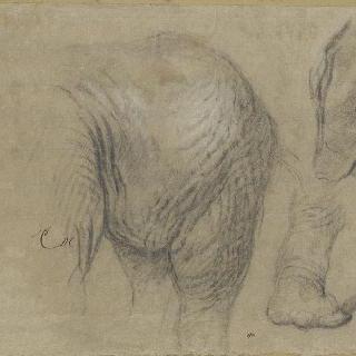 코끼리 한 마리의 몸 습작 이미지