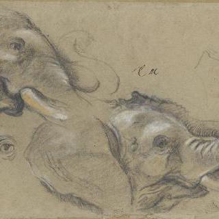 오른쪽으로 몸을 돌린 코끼리의 두 머리 습작과 눈 습작