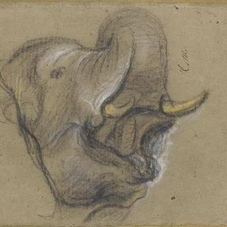 울고 있는 코끼리 한 마리의 머리