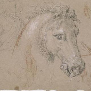 말의 우측 옆모습 머리와 목, 다리, 가슴팍과 다양한 크로키