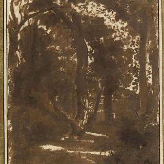 풍경 : 숲 속의 길