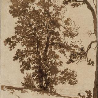 풍경 습작 : 나무들 습작