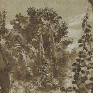 나무들과 나뭇잎들