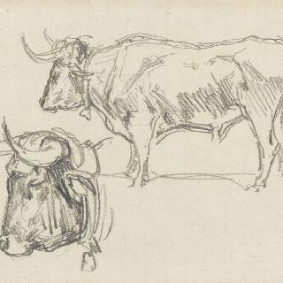 좌측 방향의 황소 측면 : 황소의 머리