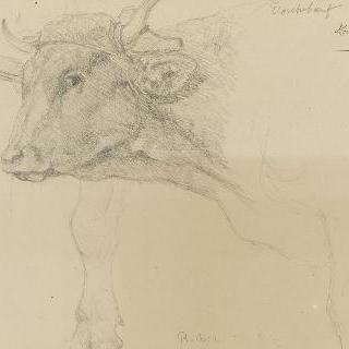 멍에를 쓴 소의 머리 : 다리 초벌화