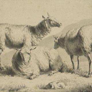 세 마리의 양