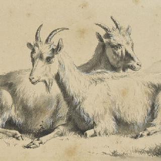 두 마리의 염소