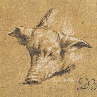 돼지의 머리, 벌어진 귀