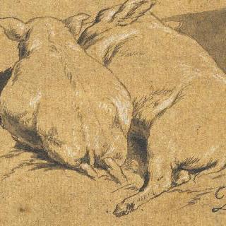 서로 붙어 잠든 두 마리의 새끼 돼지