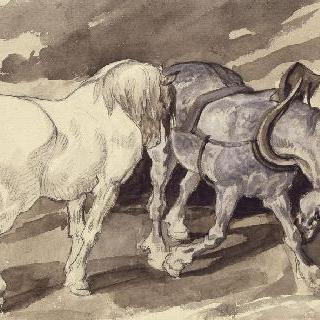 풀려 있는 짐수레 말 두 마리