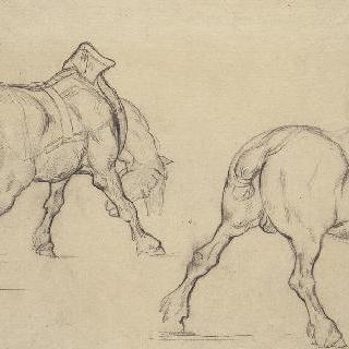 짐수레 말 두 마리