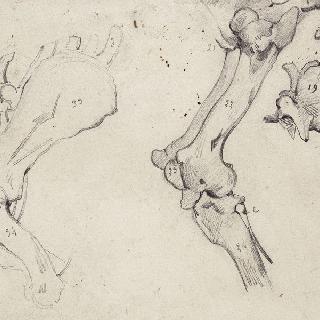 말의 뒷다리 뼈