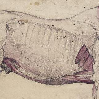말의 몸체에 대한 박피