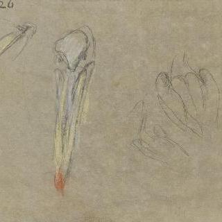 펠리컨의 습작 두 점과 뒷모습의 한 마리의 소리개