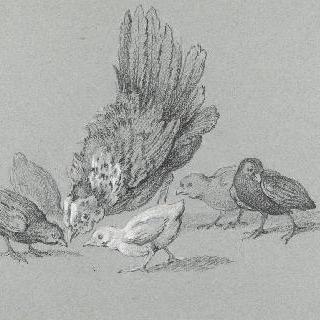 모이는 쪼아 먹는 암탉과 다섯 마리의 병아리들