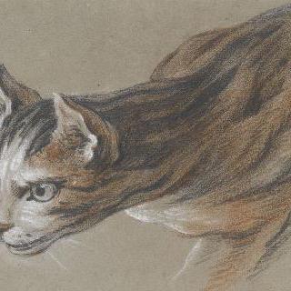 머리를 앞으로 내밀고 있는 고양이
