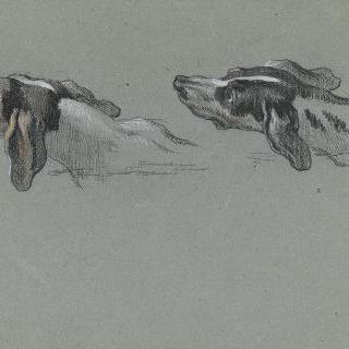 좌측 방향의 그레이 하운드의 두 얼굴