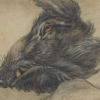 좌측 방향의 멧돼지의 머리