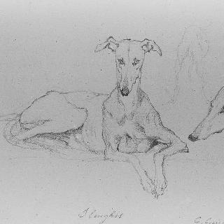 누워있는 사냥개 : 사냥개의 뒤쪽 발과 머리