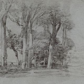 옹플뢰르 부근의 나무 숲