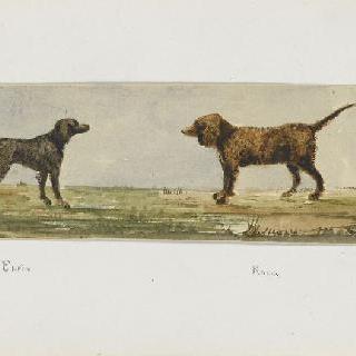 화첩 : 마주보고 있는 두 마리의 개