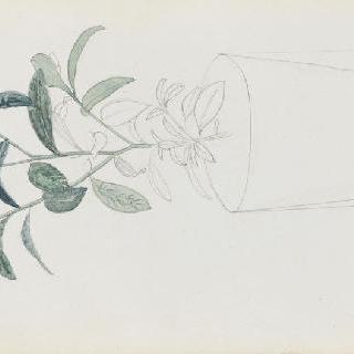화첩 : 아파트의 식물, 마편초